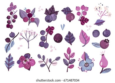 Vector set of violet berries, flowers and leaves.