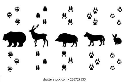 Vector set of walking wild wood animal tracks