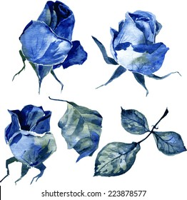 vector set of watercolor drawing blue roses, hand drawn design element