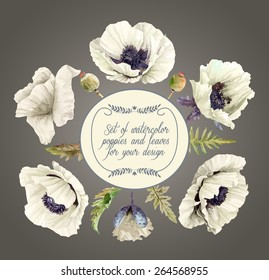 Vector set of white poppies, buds, leaves for design. Watercolor flowers. Set of floral elements to create compositions.