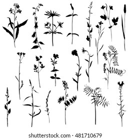 Vector set of wild flowers and herbs silhouettes, isolated plants, monochrome floral elements, hand drawn natural illustration