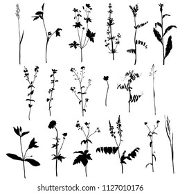Vector set of wild plants silhouettes, herbs and flowers, botanical isolated floral elements, hand drawn illustration