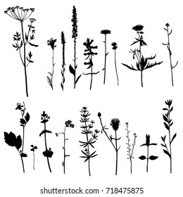 Vector set of wild plants silhouettes, herbs and flowers, monochrome botanical illustration, isolated floral elements, hand drawn illustration