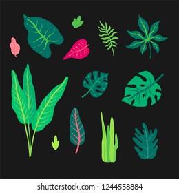 Vector set with wild tropical rainforest plants. Elements of tropic design.