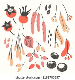 Vector set witn fall plants on white. Floral elements: Branches, leaves, fruits, seeds and berries.. Natural design. Autumn mood.