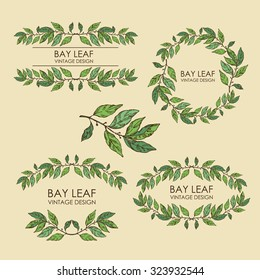 Vector set. Wreath from bay leaf, hand drawn