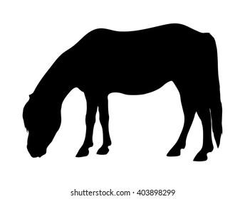 Vector shetland pony silhouette