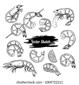 Vector shrimp hand drawn sketch .  Sketch vector  food illustration. Vintage style