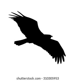 Vector silhouette of the Bird of Prey in flight with wings spread.