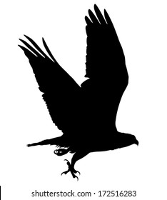 Vector silhouette of the Bird of Prey (Osprey) in flight with talon open.