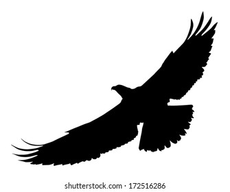 Vector silhouette of the Bird of Prey (Osprey) in flight with wings spread.
