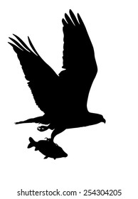 Vector silhouette of the Bird of Prey (Osprey) in flight with fish in its talons.