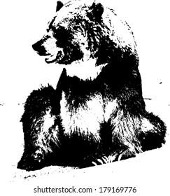Vector silhouette of a brown bear, scientifically known as Ursus Arctos.