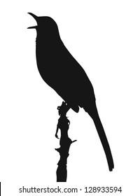 Vector silhouette of Brown Thrasher (Toxostoma rufum)