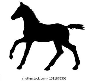 Vector silhouette of a cantering foal.