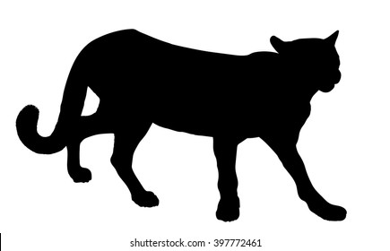 Vector silhouette of the Cougar (mountain lion, panther, puma,catamount)