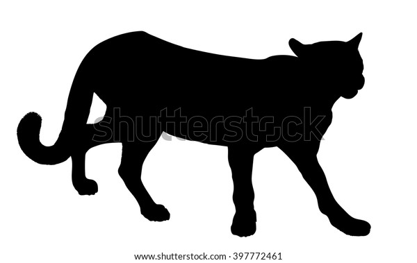 1809fcaadb6 Vector silhouette of the Cougar (mountain lion, panther, puma,catamount)