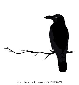 vector silhouette of a crows in different positions. vector outline.