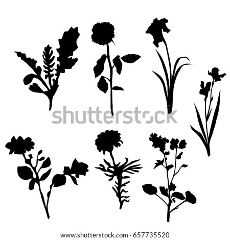Vector silhouette flowers black color isolated stock vector royalty vector silhouette flowers black color isolated on white background mightylinksfo