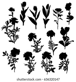 Vector silhouette flowers, carnation, chrysanthemum, Pansy, tulip,  black color, isolated on white background