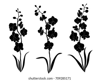 Vector silhouette flowers, orchid branch,  black color, isolated on white background
