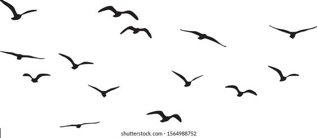 Vector Silhouette of Flying Birds