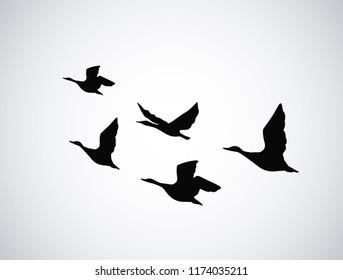 Vector silhouette flying birds, ducks on white background. Tattoo