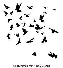 vector silhouette flying birds, isolated on white background
