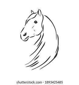Vector silhouette of a horse. beautiful horse vector sketch illustration