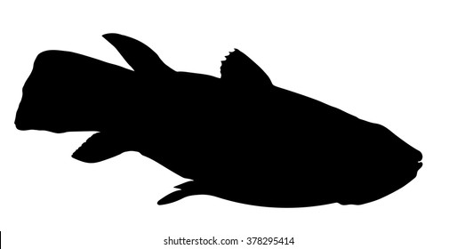 Vector silhouette of Latimeria (fish).