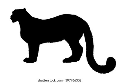 Vector silhouette of the Leopard.