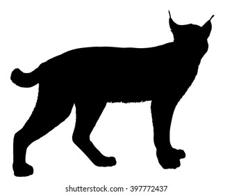 Vector silhouette of the Lynx (or Bobcat).