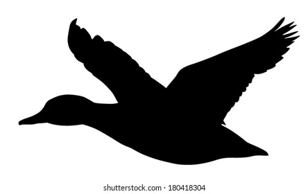 Vector silhouette of Mallard Duck in flight.