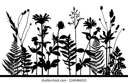 Vector silhouette of meadow wild grass and plants. Isolated horizontal floral frame on white background. Nature lawn composition. Black and white. Design for decoration, poster, card, invitation.