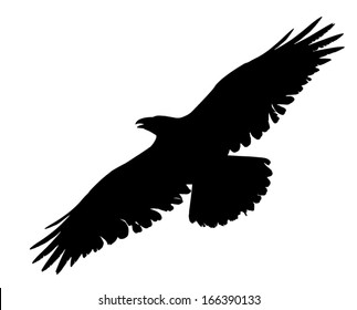 Vector silhouette of an old Raven soaring with wings spread.