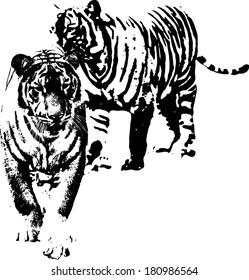 Vector silhouette of a pair of Malayan Tiger scientifically known as Panthera Tigris Jacksoni.