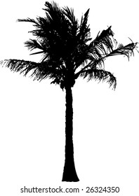 vector silhouette of the palm tree isolated on white background