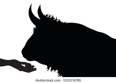 Vector silhouette of person who give food to a bull on white background. Symbol of animal, cow, beef, eat, care, save, vet, veterinary, farm.