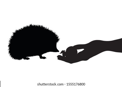 Vector silhouette of person who give food hedgehog on white background. Symbol of animal, eat, care, save, forest, autumn.