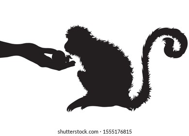 Vector silhouette of person who give food monkey on white background. Symbol of animal, wild, eat, care, save, Africa.