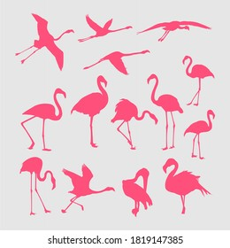 Vector silhouette of pink flamingos in various poses isolated on white background