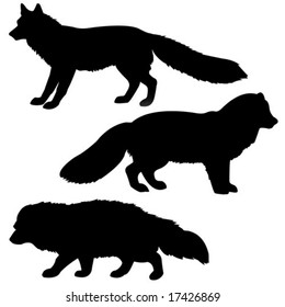 vector silhouette polar fox, badger, vixens isolated on white background