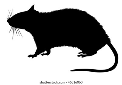 vector  silhouette of the rat on white background