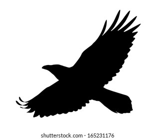 Vector silhouette of the Raven in flight.