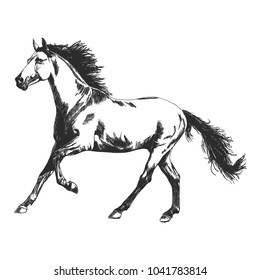 Vector silhouette of running horse, hand drawn