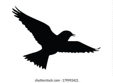 Vector silhouette of the Skylark singing in the flight.