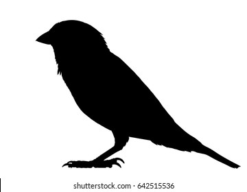 Vector silhouette of the Sparrow standing.