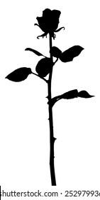 Vector silhouette of a stalk of rose, isolated against white.