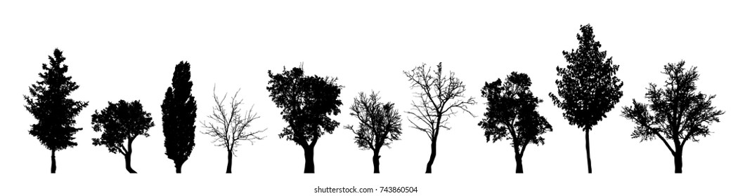 Vector silhouette of tree on white background.