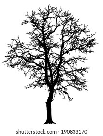 Vector silhouette of the tree without leaves.